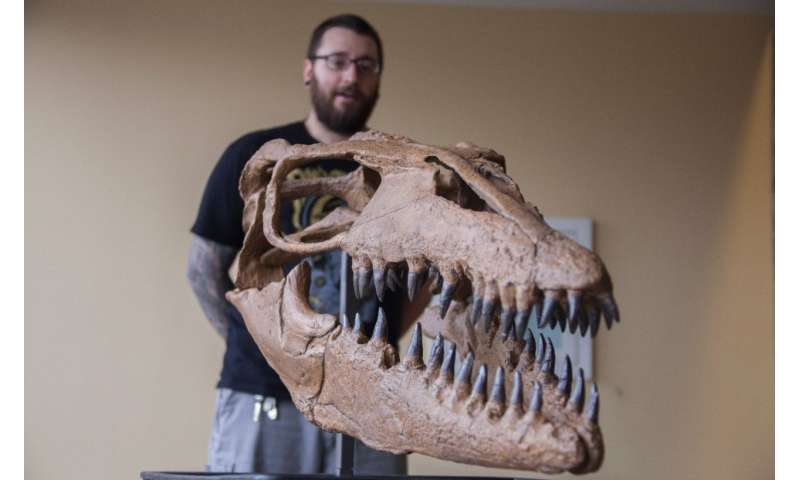 Paleontologist believes Cretaceous mosasaur might have specialized in fish