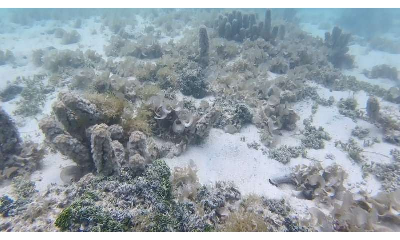 Polluted groundwater likely contaminated South Pacific Ocean coral reefs for decades