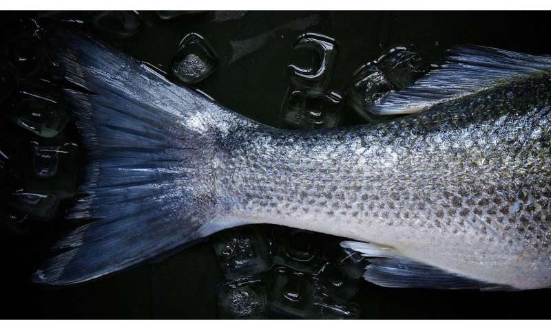 Pregnant women encouraged to eat cold-water fish