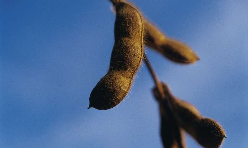 'Scaring' soybeans into defensive mode yields better plants a generation later