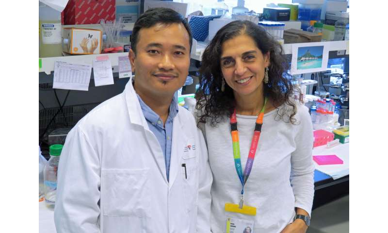 Scientific breakthrough: Promising new target for immunotherapy