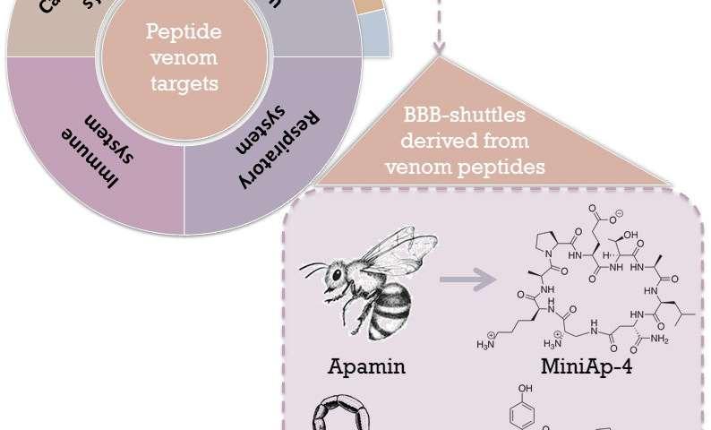 Scorpion venom to shuttle drugs into the brain