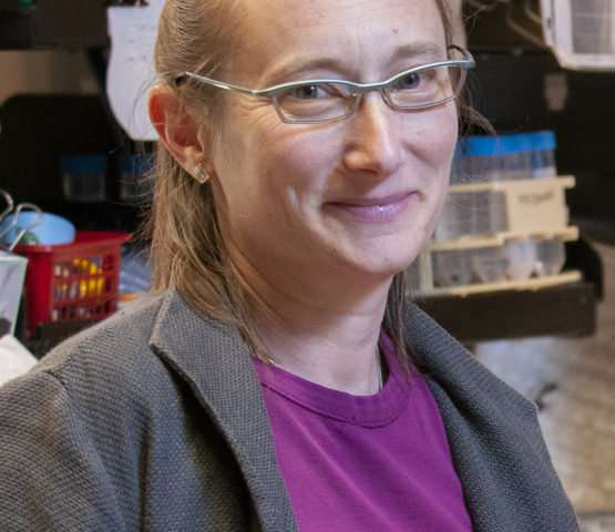 Stanford researchers identify key players in mysterious process of protein quality control