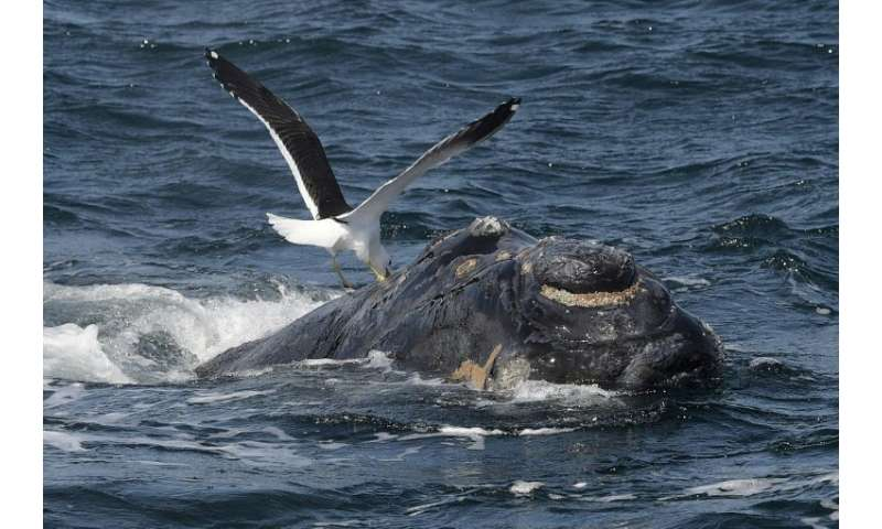 The South Atlantic Whale Sanctuary failed to get backing from a two-thirds majority of the International Whale Commission meetin