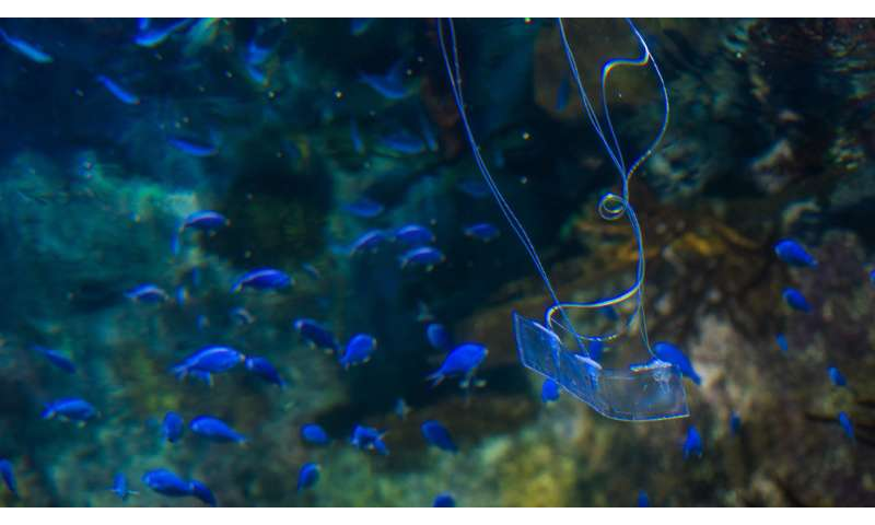 Transparent eel-like soft robot can swim silently underwater
