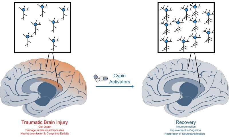 Traumatic brain injury: Discovery of two molecules could lead to new drug treatments