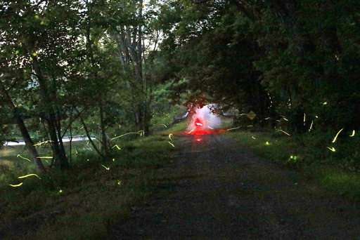 TravelLab: In a forest on the trail of synchronous fireflies