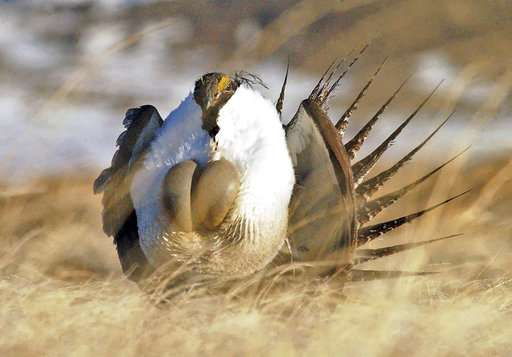 US to ease oil drilling controls protecting imperiled bird