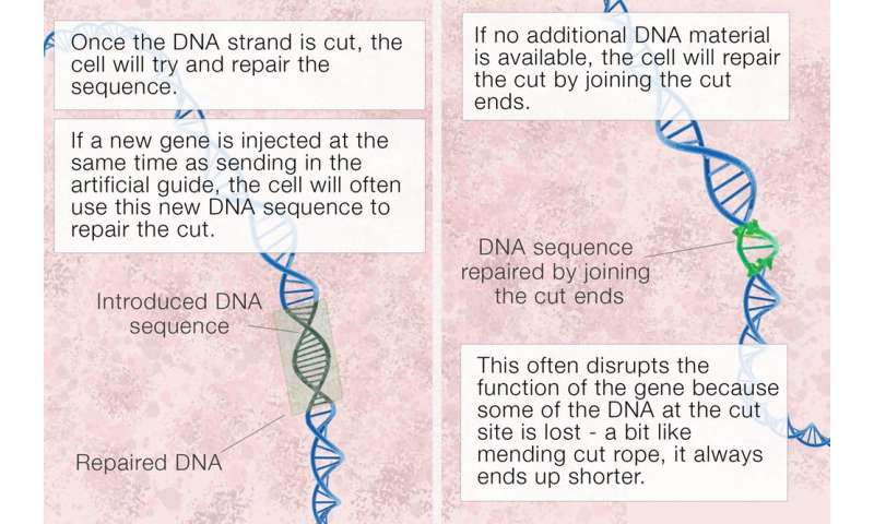 What is CRISPR gene editing, and how does itwork?