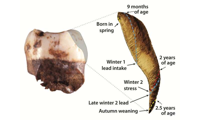 What teeth can tell about the lives and environments of ancient humans and Neanderthals