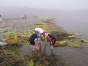Citizen scientists advance the knowledge of coastal seas