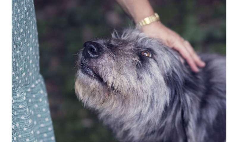 New research study could improve dog welfare