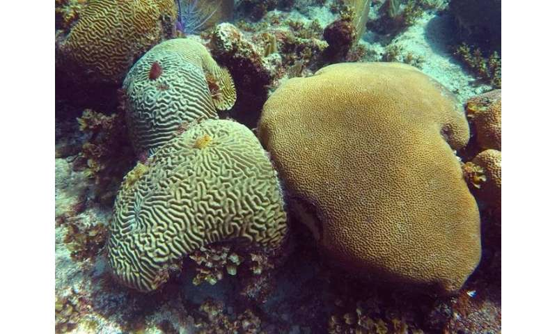 New study shows Florida Keys' corals are growing but have become more porous