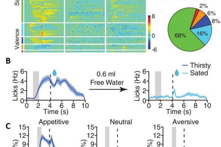 Scientists uncover key brain mechanism in salience processing