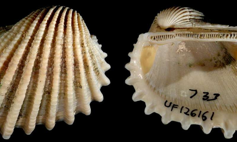 Biogeography and biodiversity of western Atlantic mollusks