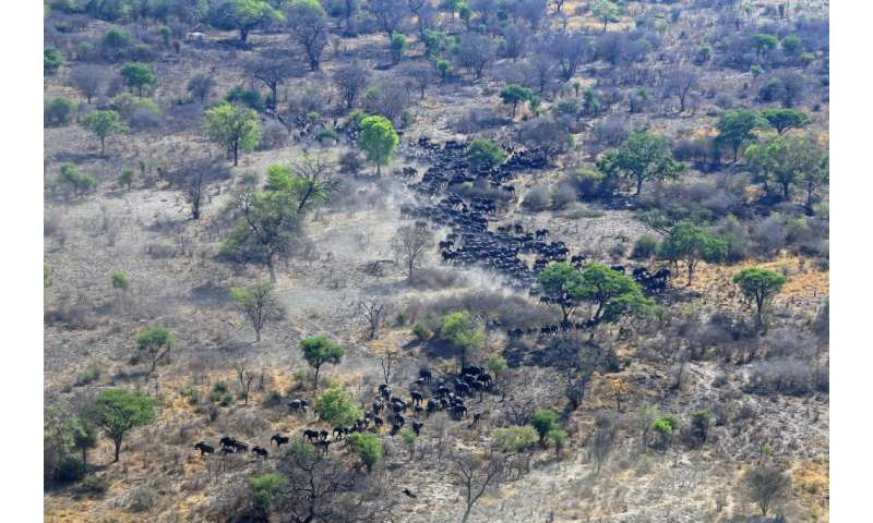 Researchers say 'active protection' needed to help Angola's threatened elephants