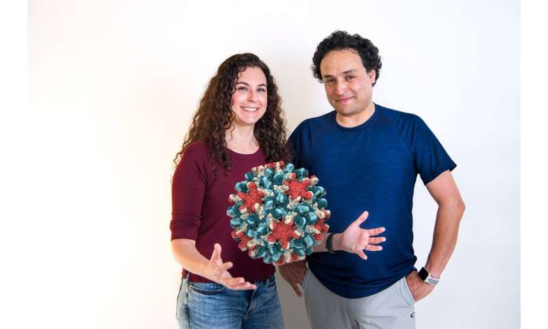 Research reveals new insights into hepatitis B