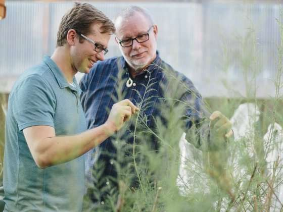 Researchers find that beetle odor could help tackle tamarisk