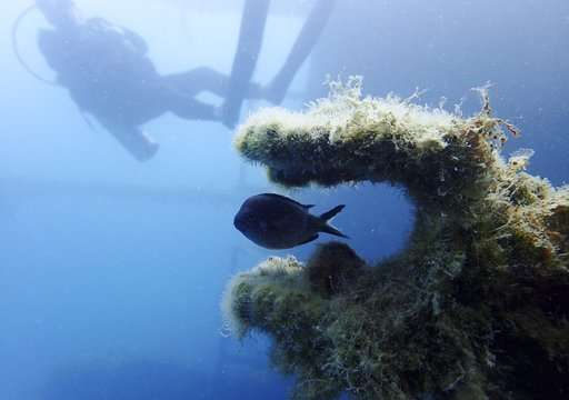 Archaeologists urge Albania to protect underwater heritage