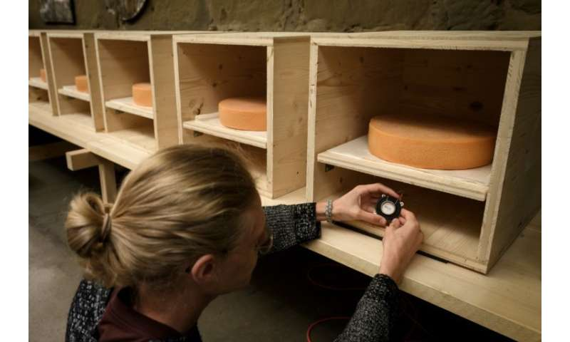 University of the Arts students, placing a small music speaker below   a wheel of Emmental, are helping with the experiment