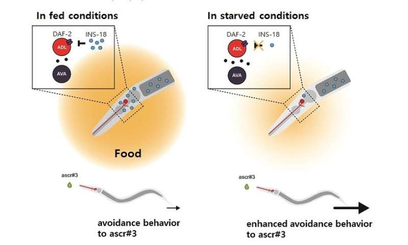 New study reveals the cause of sensory changes in starved state