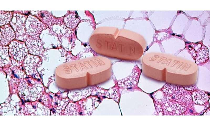 Cholesterol-lowering drugs reduce brown adipose tissue
