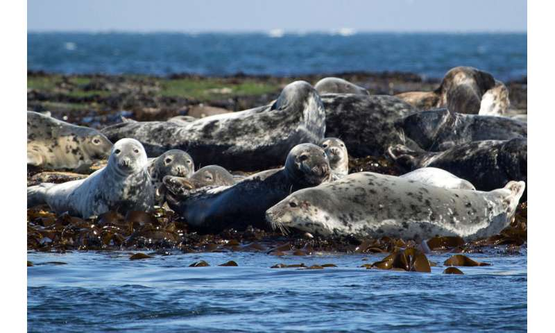 First evidence that seals can consume microplastics via their prey
