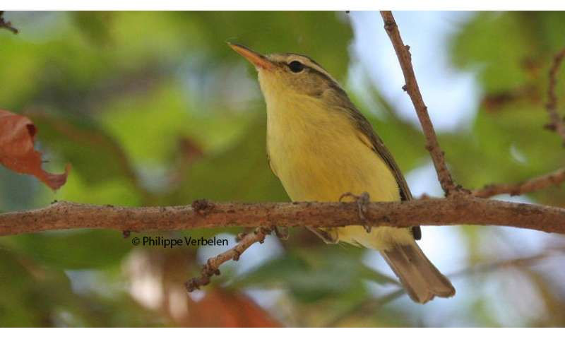 Genomic analysis helps in discovery of unusual new bird species from Indonesia