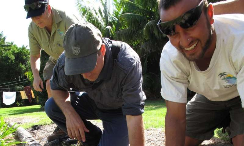 How we wiped out the invasive African big-headed ant from Lord Howe Island