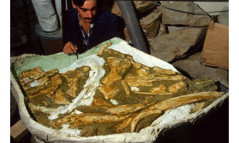 New species of ancient whale identified and named by Otago paleontologists