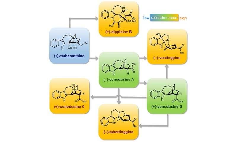 Novel strategy to transform a commercially available iboga alkaloid to post-iboga alkaloids