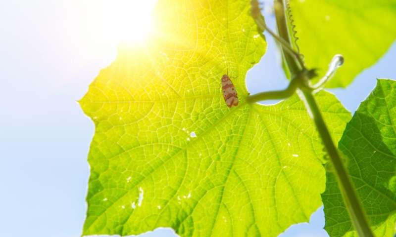 Photosynthesis in plants key to speedy evolution