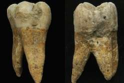 Prehistoric teeth give up their secrets