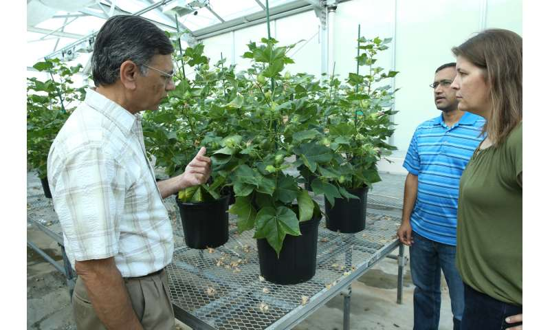 Protein derived from cottonseed for human nutrition one step closer to reality