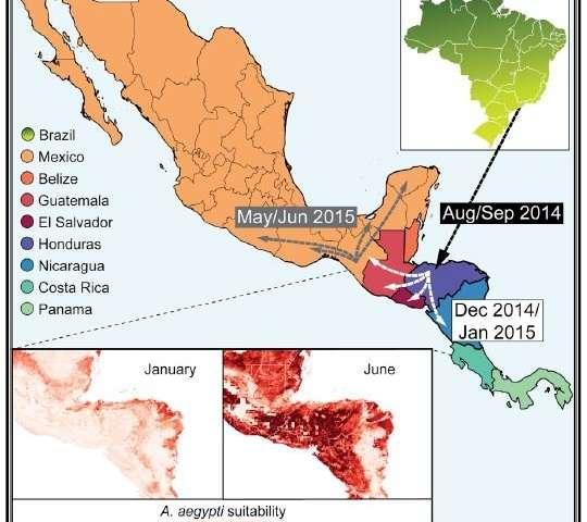 Reconstructing Zika's spread