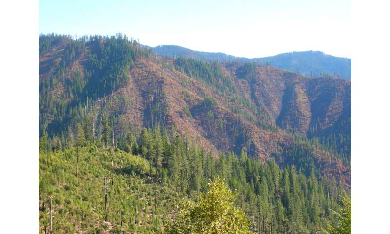 Salvage logging, planting not necessary to regenerate Douglas firs after Klamath fires