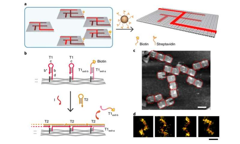 Solving Mazes with Single-Molecule DNA Navigators