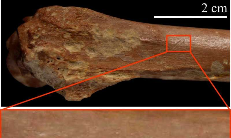 Stone tools date early humans in North Africa to 2.4 million years ago
