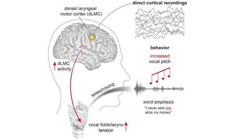 The neuroscience of human vocal pitch