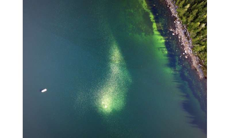 UBC researchers use drones to track jellyfish blooms