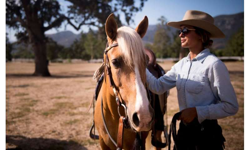 Wild horses living on the Channel Islands face an uncertain future on the mainland