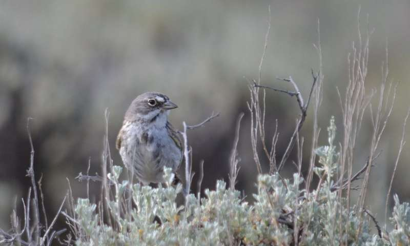 Researchers study how well greater sage grouse habitat protects other species