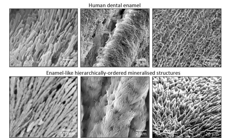 Scientists develop material that could regenerate dental enamel