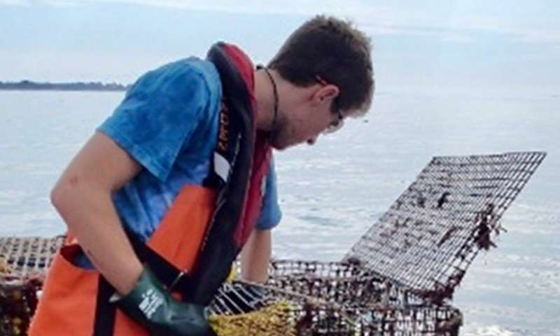 Research reveals link between warming and lobster disease