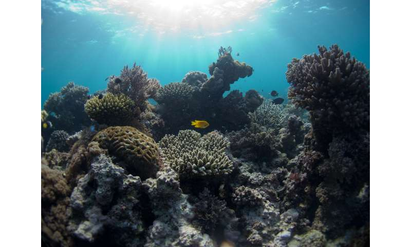 Scientists discover balance of thermal energy and low climate stress drive coral species diversity