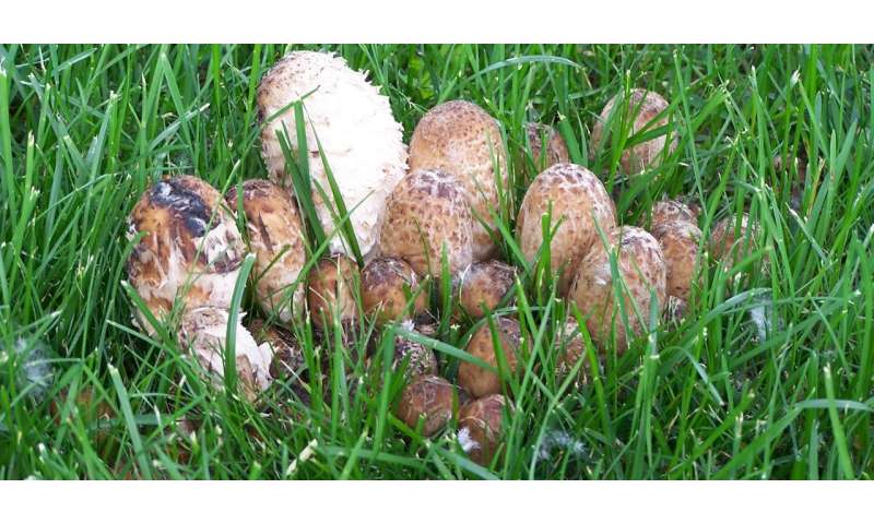3 tips on how to distinguish an edible mushroom from a poisonous one