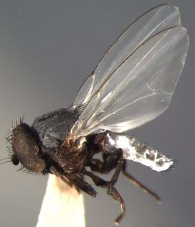 International research team finds 'staggering' number of fly species in small patch of tropical forest