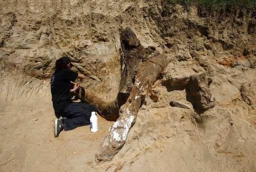 Macedonia: 8 million-year-old elephant-like remains found