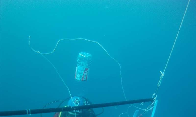 Meet the ocean creatures that use a mesh of mucus to catch their food