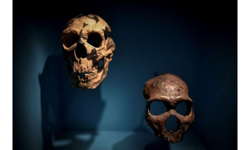 Neanderthals are thought to have needed up to 4,480 calories a day to keep them alive in the European winter—some of their skull